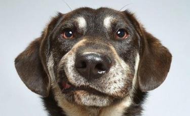 """Illustration : """"20 photos de chiens soulignant le caractère unique et la beauté de chacun d'eux"""""""