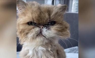 """Illustration : """"Les émouvants derniers instants de vie d'un chat atteint d'un cancer et qui avait enfin trouvé une famille"""""""
