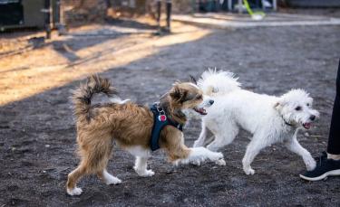 """Illustration : """"En promenade dans un parc, ce couple ne s'attendait absolument pas à rencontrer le fils de leur chien"""""""