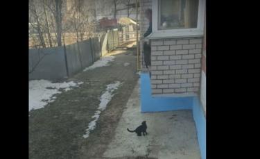 """Illustration : """"Un homme utilise un moyen original pour faire rentrer ses chats ! (Vidéo)"""""""