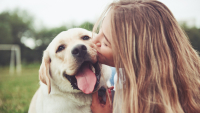 Illustration : Faire le deuil de son chien