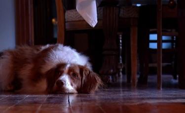 """Illustration : """"Victime d'un accident l'ayant privé d'une patte avant, ce chien a développé sa propre technique pour marcher"""""""