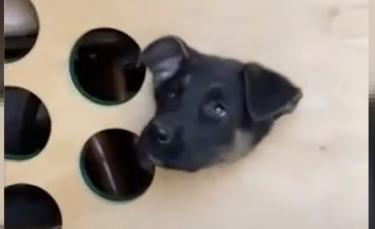 """Illustration : """"Un chien piégé dans un cornhole reçoit un panier de Pâques après avoir été sauvé par des policiers"""""""