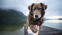Illustration : L'incinération après la mort d'un chien