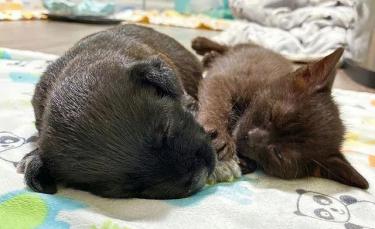 """Illustration : """"Un chaton errant et mal en point recueilli par un refuge se lie d'une jolie amitié avec un chiot abandonné"""""""