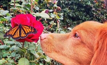 """Illustration : """"15 images magnifiques d'un chien amoureux des papillons """""""