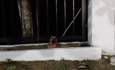 """Illustration : """"Un chien abandonné dans un parc attend désespérément le retour de son propriétaire et refuse la nourriture offerte par les passants"""""""