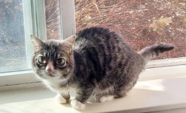"""Illustration : """"Un chat atteint de nanisme fait tout pour surmonter ses nombreux problèmes de santé"""""""