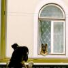 Illustration : 16 plaisanteries à propos du confinement avec nos animaux en vedettes
