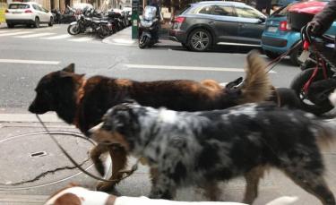 """Illustration : """"19 photos de chiens qui ont décidé d'en promener d'autres"""""""
