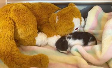 """Illustration : """"Une association fait tout pour sauver la vie d'un chaton retrouvé dans le moteur d'une voiture"""""""
