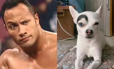 """Illustration : """"16 photos comiques de chiens et de leurs répliques """""""