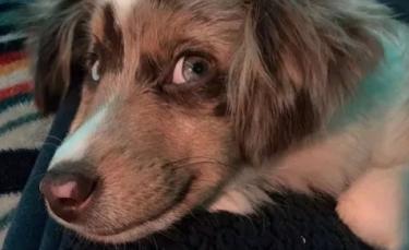 """Illustration : """"Ces 14 photos de chiens au sourire charmeur illumineront votre journée !"""""""