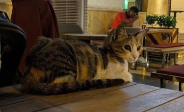 """Illustration : """"Un chat se rend tous les jours dans le même café pour retrouver un client très spécial !"""""""