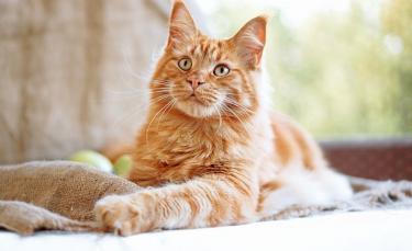"""Illustration : """"Les meilleurs noms en U pour un chat"""""""