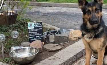 """Illustration : """"Amoureuse des animaux, cette femme ouvre un petit café pour abreuver les chiens du quartier"""""""