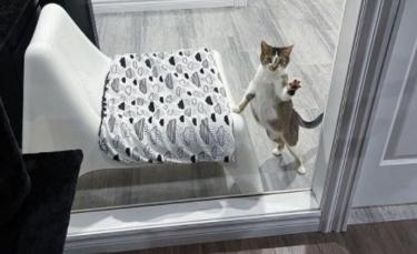 """Illustration : """"Une chatte en gestation délaissée par ses propriétaires réclame de l'aide chez la voisine"""""""