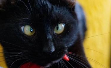 """Illustration : """"Un chat errant atteint de strabisme espère désespérément trouver une famille aimante (vidéo)"""""""