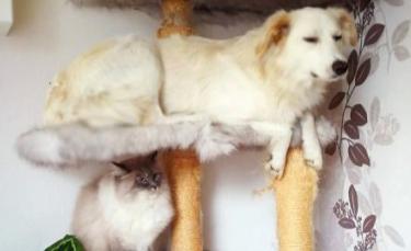 """Illustration : """"18 photos amusantes de chiens qui se comportent comme des chats"""""""