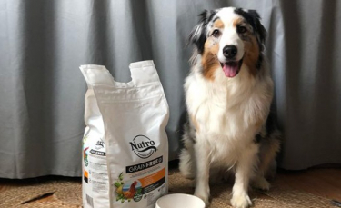 """Illustration : """"Notre chienne Oria a testé pour vous les croquettes Nutro. Qu'en pense-t-elle ?"""""""