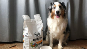 Illustration : Notre chienne Oria a testé pour vous les croquettes Nutro. Qu'en pense-t-elle ?