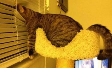 """Illustration : """"20 photos de chats fatigués et prêts à s'endormir n'importe où"""""""
