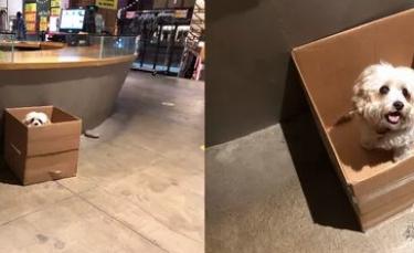 """Illustration : """"20 photos adorables de chiens accros à leur boîte en carton"""""""