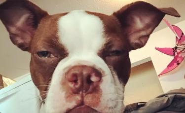 """Illustration : """"15 chiens amusants au regard désapprobateur"""""""