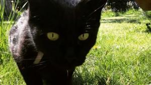 Illustration : 15 photos mettant en valeur la beauté des chats noirs