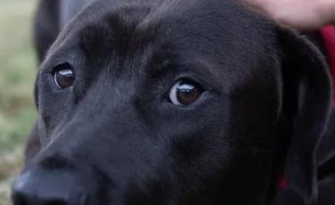 """Illustration : """"Un refuge tente de réconforter un chien abandonné et effrayé par ce qu'il vient de lui arriver"""""""