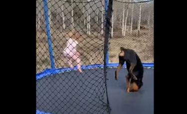 """Illustration : """"La vidéo adorable d'une petite fille et de son Rottweiler s'amusant comme des fous sur un trampoline"""""""