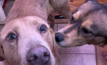 """Illustration : """"Un homme bouleversé après avoir perdu son chien refuse d'abandonner les recherches pendant 4 ans (vidéo)"""""""