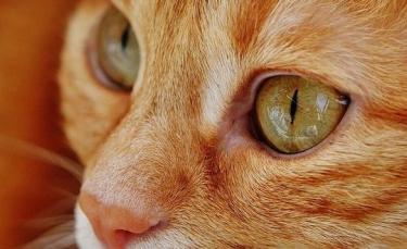 """Illustration : """"Le propriétaire d'un chat malade vend sa voiture pour payer ses frais vétérinaires. Lors de la vente, il tombe sur un acheteur hors du commun"""""""