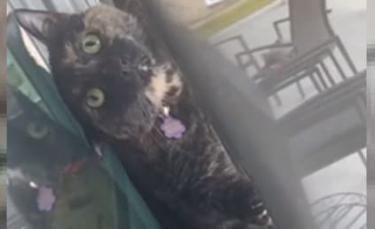 """Illustration : """"Une femme stupéfaite de trouver son chat coincé entre la fenêtre et la moustiquaire (vidéo)"""""""