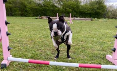 """Illustration : """"Un chien aveugle participe à des épreuves d'agility et remporte des prix malgré son handicap ! (Vidéo)"""""""
