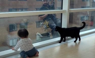 """Illustration : """"La vidéo touchante d'un bébé et d'un chat s'amusant avec des laveurs de vitres"""""""
