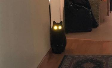 """Illustration : """"15 chats ayant rejoint le côté obscur"""""""