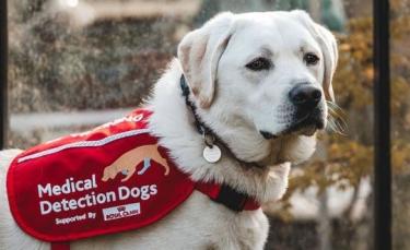 """Illustration : """"Une bénévole accueille et entraîne un chien à détecter des maladies pour sauver des vies"""""""