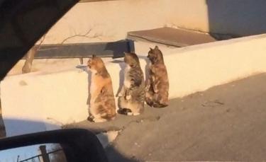"""Illustration : """"18 photos de chats mignons qui se prennent pour des manchots"""""""