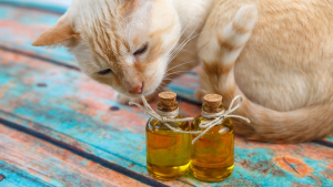 Illustration : Les huiles et acides gras essentiels pour chat