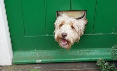 """Illustration : """"Ces 19 chiens regardant à travers la clôture souhaitent vous dire bonjour !"""""""