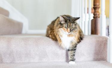 """Illustration : """"9 conseils pour soulager l'arthrose de votre chat"""""""