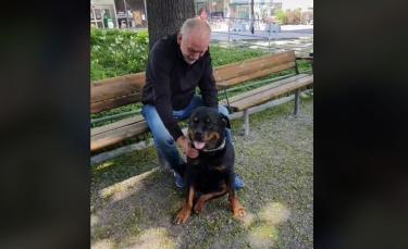 """Illustration : """"La vidéo touchante d'un Rottweiler réconfortant un inconnu qui vient de perdre son chien"""""""
