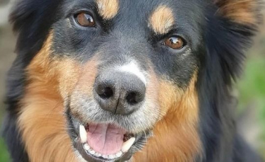 """Illustration : """"Un chien d'assistance prend soin de sa propriétaire en effectuant des tâches quotidiennes"""""""