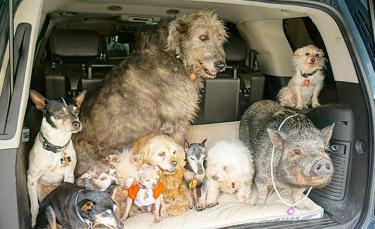 """Illustration : """"Un homme se donne pour mission d'adopter les chiens seniors dont personne ne veut"""""""