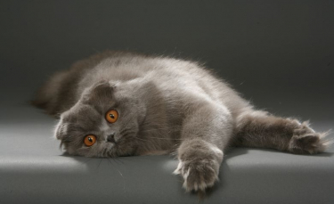 """Illustration : """"L'arthrose chez le chat"""""""