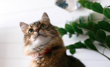 """Illustration : """"La médecine naturelle pour soigner son chat"""""""