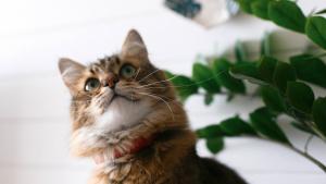 Illustration : La médecine naturelle pour soigner son chat