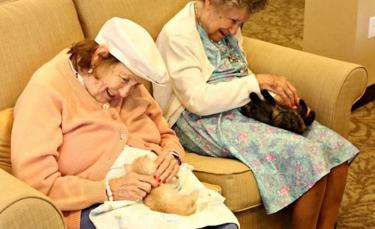 """Illustration : """"Des patients atteints d'Alzheimer et de démence aux petits soins avec des chatons abandonnés"""""""