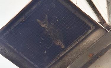 """Illustration : """"Un chat piégé dans une grille de ventilation sans manger ni boire. Les sauveteurs ont opéré pendant 4 jours !"""""""